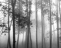 Jungle mist ...