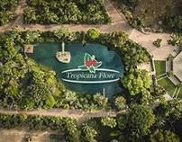Tropicana Flore / Work
