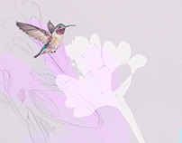 Hummingbird and flowers illustration.