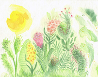 Jardincitos / Little gardens