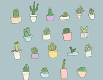Cactus and succulents!!!