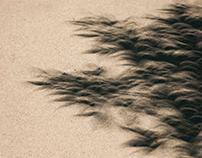 Solar Eclipse Shadow Distortions