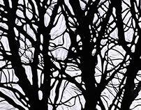 Сhestnut tree