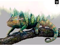 chameleon nature