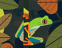 Fanatical About Frogs teaser - Flying Eye Books