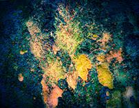 LOUD! - The Tree Bark Story