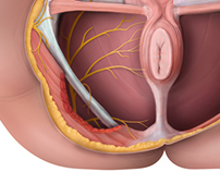 E-learning anatomic illustrations