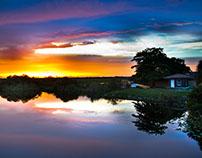 Nature: Florida