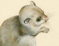 zoological & botanical illustration /watercolor
