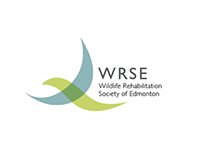 WRSE Branding and Stationary