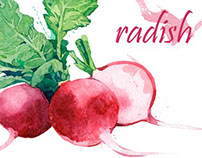 Botanical illustration. Vegetables