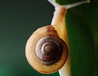 Snails on leaf. Studio shot