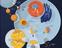Storytelling in Immunology