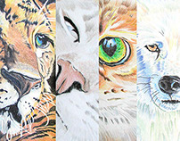 Animal Pencil Drawings by K. Fairbanks