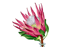 The giant protea