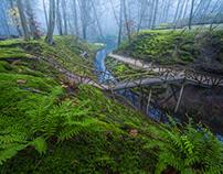 Moss Dream