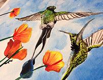 Colibríes - Acuarela (Hummingbirds -watercolor)
