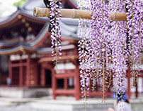 Byodoin Temple of wisteria