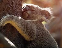 Nef - Koala & Kaplumbağa