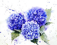Hydrangea in watercolor