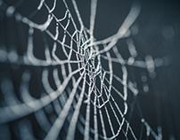 La toile du web
