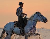 Steven Mezynieski: Horse Boarding Services