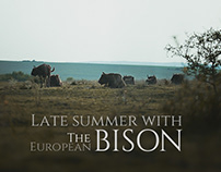 LATE SUMMER WITH The European Bison