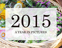 2015 A Year in Pictures