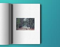 Book · Laberintos naturales