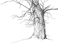Trees drawing series