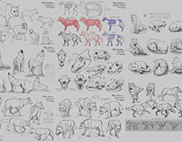 "Wolf Study ""Animals Visual Library"""