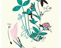 Botanical observations
