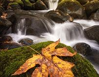 An Autumn scene next to an Oregon creek photograph