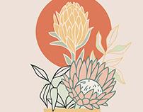Protea Flowers Illustration