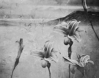 Lily Dream