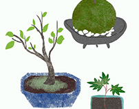 Potted plants and moss balls