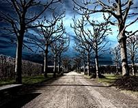 Solarisation - Trees in winter