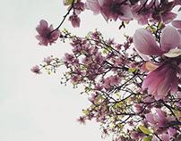 Flowers Pt. V