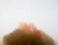 sunny foggy AUTUMN day
