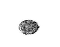 Trilobite stippling