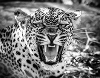 African Impact - Greater Kruger - February 2016