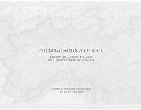 Phenomenology of Rice