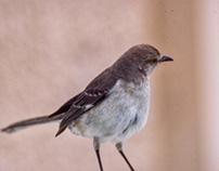 Here birdie birdie