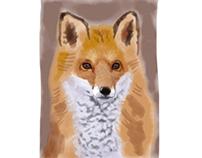 Fox Sketch