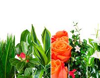 Product Photography - playful Plant Photos