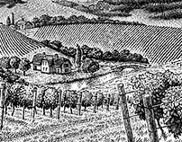 Panorama of the vineyard.