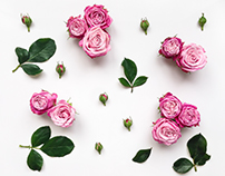 Flat Lay Roses Photo