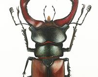 Beetle - watercolor painting