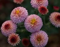 Cute flowers #3