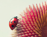 Ladybug and the PencilFlower